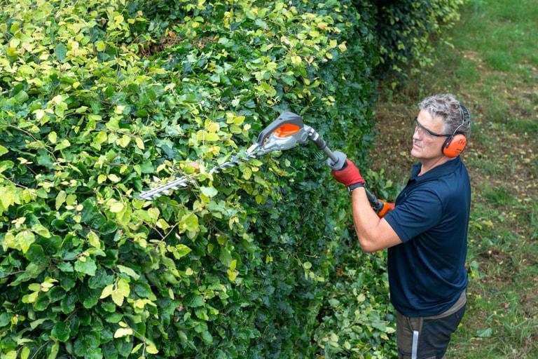 Kraftsparend hecken schneiden nachrichten landleben