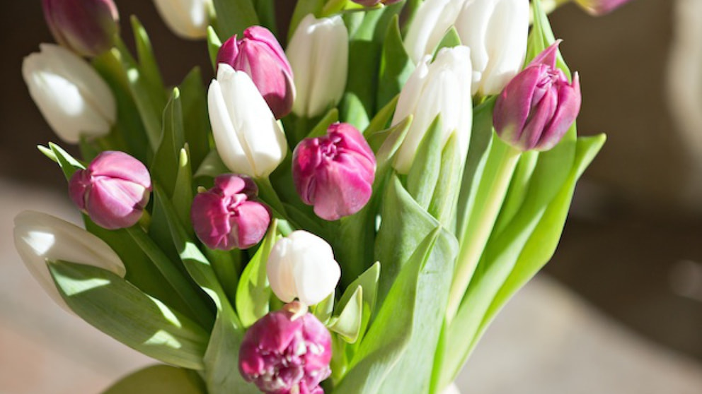 Tulpen Länger Haltbar