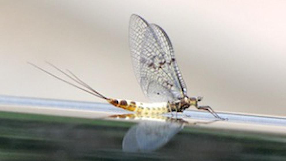 was tun gegen eintagsfliegen tiere frage und antwort wochenblatt f r landwirtschaft. Black Bedroom Furniture Sets. Home Design Ideas