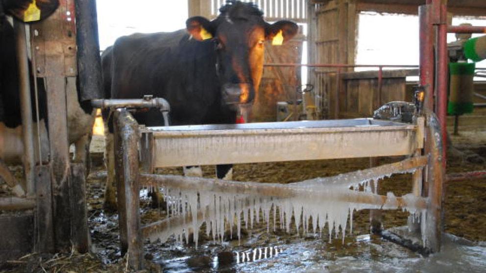 Tränkewasser ohne Eis - Nachrichten - Landwirtschaft - Wochenblatt ...