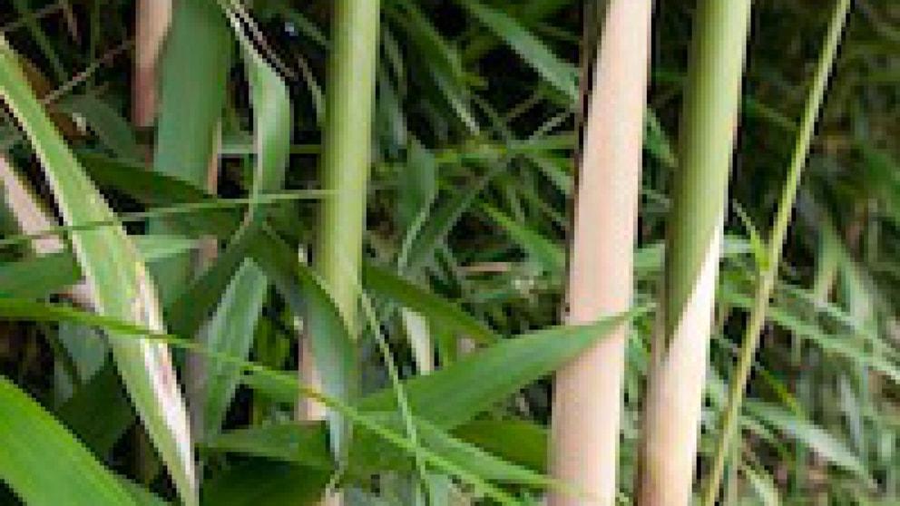 Bambus Wachstum Mit Folie Stoppen Garten Frage Und Antwort