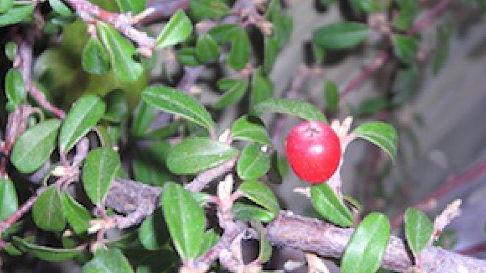 Viel Unkraut Im Bodendecker Garten Frage Und Antwort